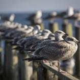 Fotokurse auf Rügen