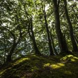 Küstenwald bei Lohme Insel Rügen Fotografie Manto Sillack Fotokurse auf Rügen